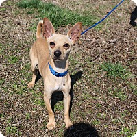 Adopt A Pet :: Taco~meet me!~ - Glastonbury, CT
