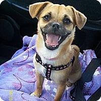Adopt A Pet :: Pancake - Poway, CA