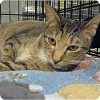 Adopt A Pet :: Hyacinth - The Colony, TX