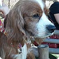 Adopt A Pet :: Remy - Encinitas, CA