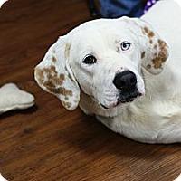 Adopt A Pet :: Sam - Pocahontas, AR