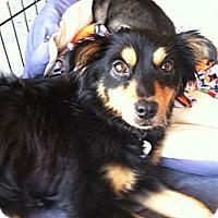 Adopt A Pet :: Princess - North Hollywood, CA