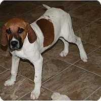 Adopt A Pet :: Jill - Glastonbury, CT