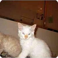 Adopt A Pet :: Pele' - Irvine, CA