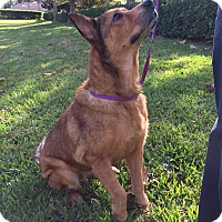 Adopt A Pet :: Lisa - Orlando, FL