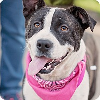 Adopt A Pet :: Lola - Kingwood, TX