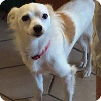 Adopt A Pet :: CHARLIE - Terra Ceia, FL