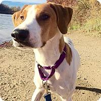 Adopt A Pet :: Sydney - Livonia, MI