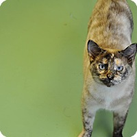 Adopt A Pet :: Lizzy - Gadsden, AL