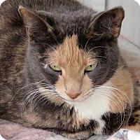 Adopt A Pet :: Garnet - Gonzales, TX