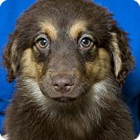 Adopt A Pet :: Rivka Adoption pending - Manchester, CT