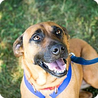 Adopt A Pet :: Allison~meet me~new pics! - Glastonbury, CT