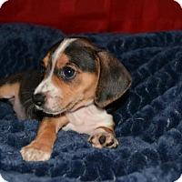 Adopt A Pet :: Keiko - Houston, TX