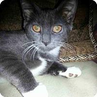 Adopt A Pet :: Colby - Barrington, NJ