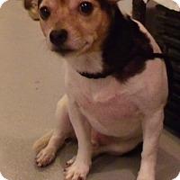Adopt A Pet :: Wally - Muskegon, MI
