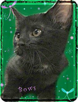 Domestic Shorthair Kitten for adoption in Benton, Arkansas - Bows