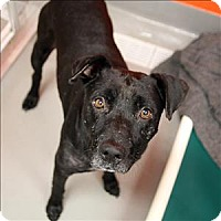 Pit Bull Terrier Mix Dog for adoption in Dallas, Texas - East