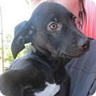 Adopt A Pet :: Wolsey