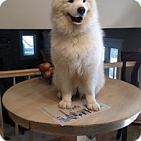 Adopt A Pet :: Angel - Arlington Heights, IL