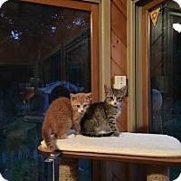 Adopt A Pet :: Nicky and Dawn - Swansea, MA