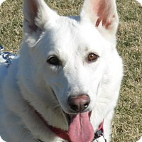 German Shepherd Dog/German Shepherd Dog Mix Dog for adoption in Phoenix, Arizona - Shobha