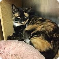 Adopt A Pet :: Flossie - Colmar, PA