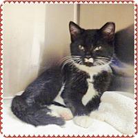 Adopt A Pet :: STASH-available 12/07 - Marietta, GA