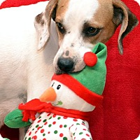 Adopt A Pet :: Candi - Okeechobee, FL