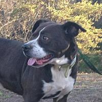 Adopt A Pet :: Spanky - Rutledge, TN