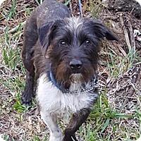 Adopt A Pet :: Lindy - Naples, FL