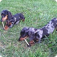 Adopt A Pet :: Hilda and Sophia - Bardonia, NY