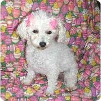 Adopt A Pet :: Gigi - Mooy, AL