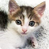 Adopt A Pet :: Ozzy - Irvine, CA