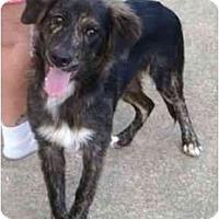 Adopt A Pet :: Toby - Orlando, FL