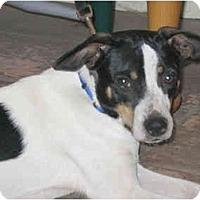 Adopt A Pet :: Rocco - Concord, CA