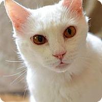 Adopt A Pet :: Fondu - Alexandria, VA