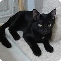 Adopt A Pet :: Buddy - Raritan, NJ