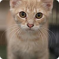 Adopt A Pet :: Greg - Sacramento, CA