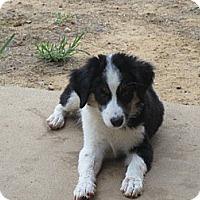 Adopt A Pet :: Einstein - Salem, NH