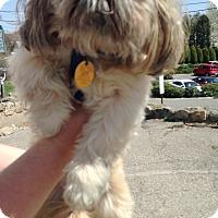 Adopt A Pet :: CODY - Pompton lakes, NJ