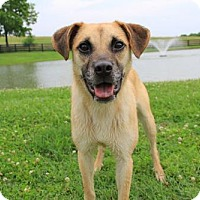 Adopt A Pet :: Janey - Thompson's Station, TN