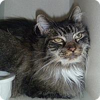 Adopt A Pet :: Kee - Hamburg, NY