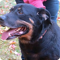 Adopt A Pet :: Road Dog - SOUTHINGTON, CT