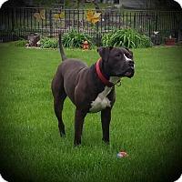 Adopt A Pet :: Rocky - Lisbon, IA