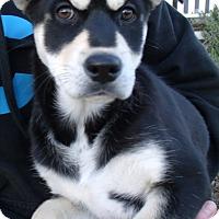 Adopt A Pet :: SASHA - Corona, CA