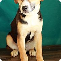 Adopt A Pet :: Hooch - Waldorf, MD