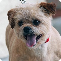 Terrier (Unknown Type, Small) Mix Dog for adoption in Palmdale, California - Tanner
