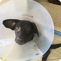 Adopt A Pet :: Mario in TX - Mira Loma, CA