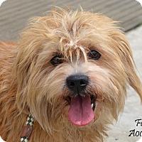 Adopt A Pet :: Furby - Woonsocket, RI