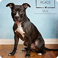 Adopt A Pet :: Max - Mount Laurel, NJ